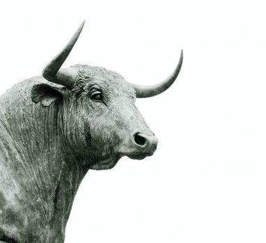 Ujarzmić byka – Wahoo bike